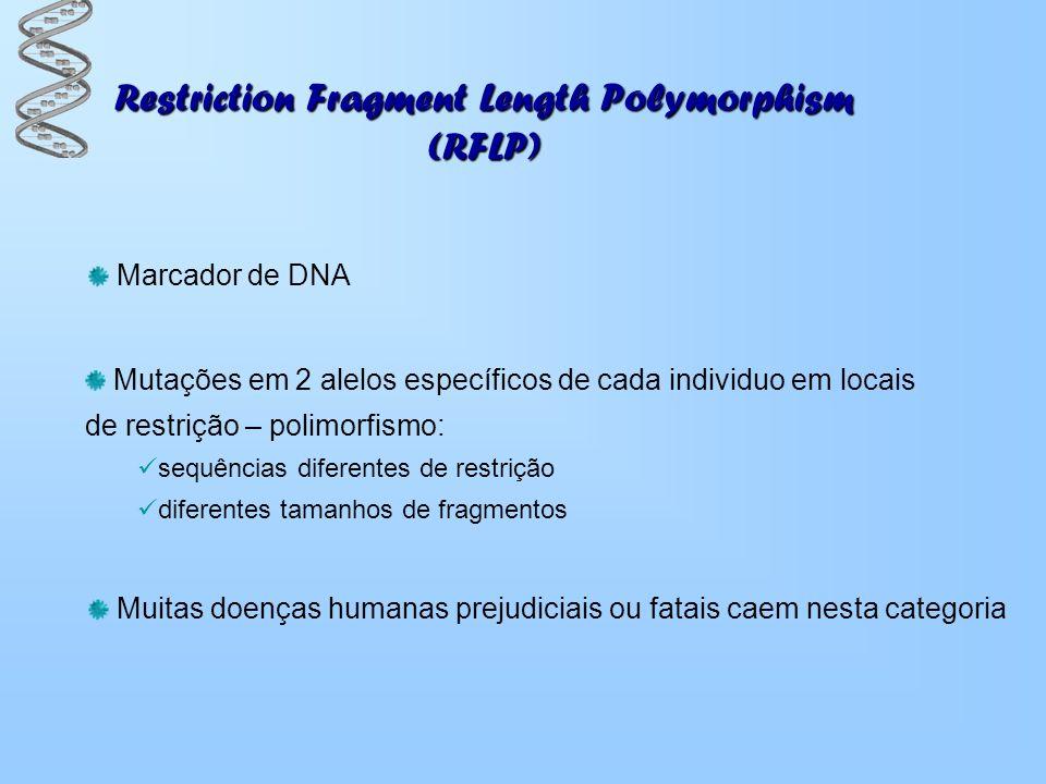 Restriction Fragment Length Polymorphism (RFLP) Marcador de DNA Mutações em 2 alelos específicos de cada individuo em locais de restrição – polimorfis