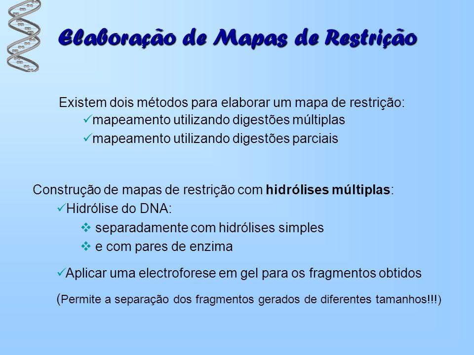 Elaboração de Mapas de Restrição Existem dois métodos para elaborar um mapa de restrição: mapeamento utilizando digestões múltiplas mapeamento utiliza