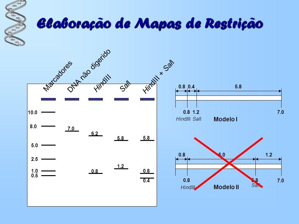 Elaboração de Mapas de Restrição Marcadores 0.5 1.0 2.5 5.0 8.0 10.0 DNA não digerido HindIII SalI HindIII + SalI 7.0 6.2 5.8 0.8 1.2 0.8 0.4 0.8 1.2
