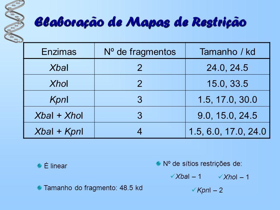 Elaboração de Mapas de Restrição EnzimasNº de fragmentosTamanho / kd XbaI224.0, 24.5 XhoI215.0, 33.5 KpnI31.5, 17.0, 30.0 XbaI + XhoI39.0, 15.0, 24.5