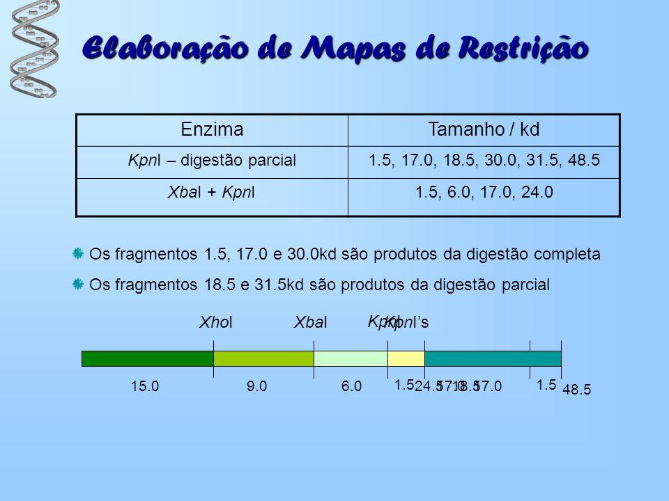 Elaboração de Mapas de Restrição Os fragmentos 1.5, 17.0 e 30.0kd são produtos da digestão completa Os fragmentos 18.5 e 31.5kd são produtos da digest