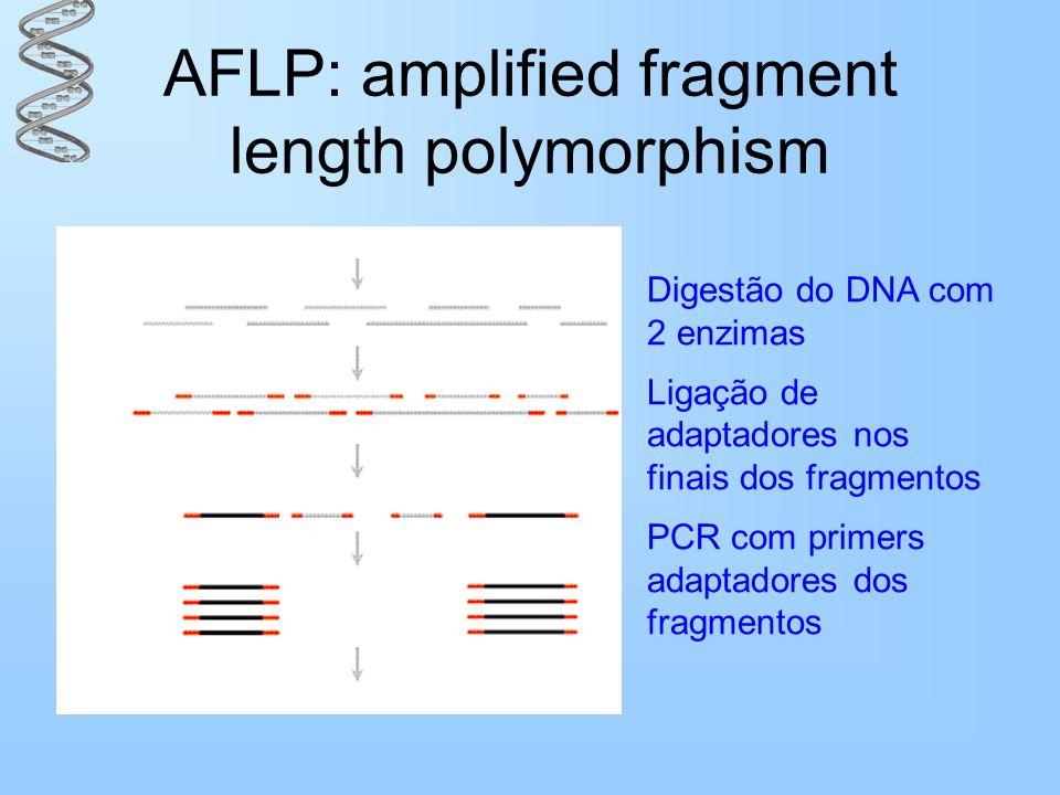 AFLP: amplified fragment length polymorphism Digestão do DNA com 2 enzimas Ligação de adaptadores nos finais dos fragmentos PCR com primers adaptadore