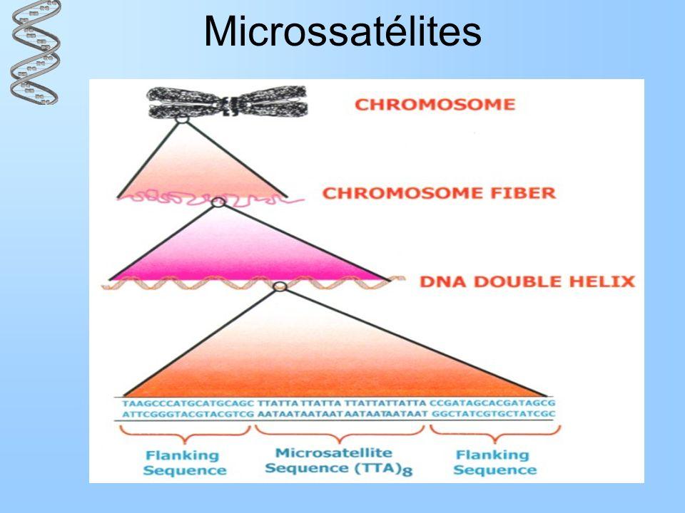 Microssatélites