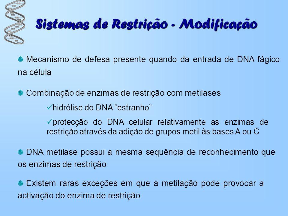 Sistemas de Restrição - Modificação Mecanismo de defesa presente quando da entrada de DNA fágico na célula Combinação de enzimas de restrição com meti