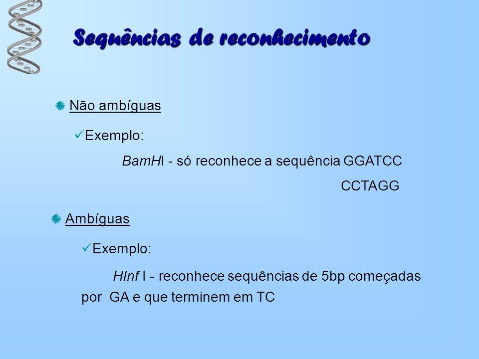 Sequências de reconhecimento Não ambíguas Exemplo: BamHI - só reconhece a sequência GGATCC CCTAGG Ambíguas Exemplo: HInf I - reconhece sequências de 5