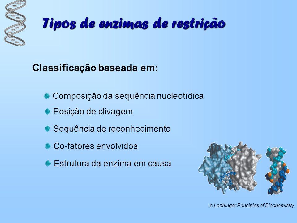 Tipos de enzimas de restrição Tipo I 3 subunidades: 1 subunidade de restrição (R) 1 subunidade de metilação (M) 1 subunidade de reconhecimento (S) Sequência de reconhecimento é assimétrica Local de hidrólise não é específico e ocorre a mais de 1000 bp de distância Hidrólise é sempre num local diferente e necessita de ATP Impede o seu uso em engenheira genética