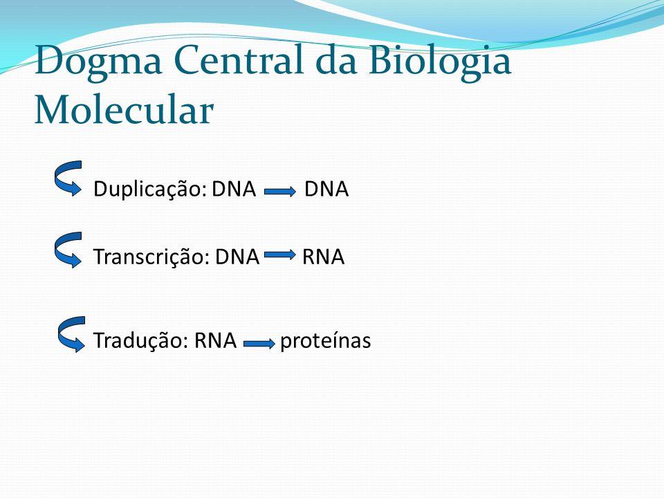 Dogma Central da Biologia Molecular Duplicação: DNA DNA Transcrição: DNA RNA Tradução: RNA proteínas