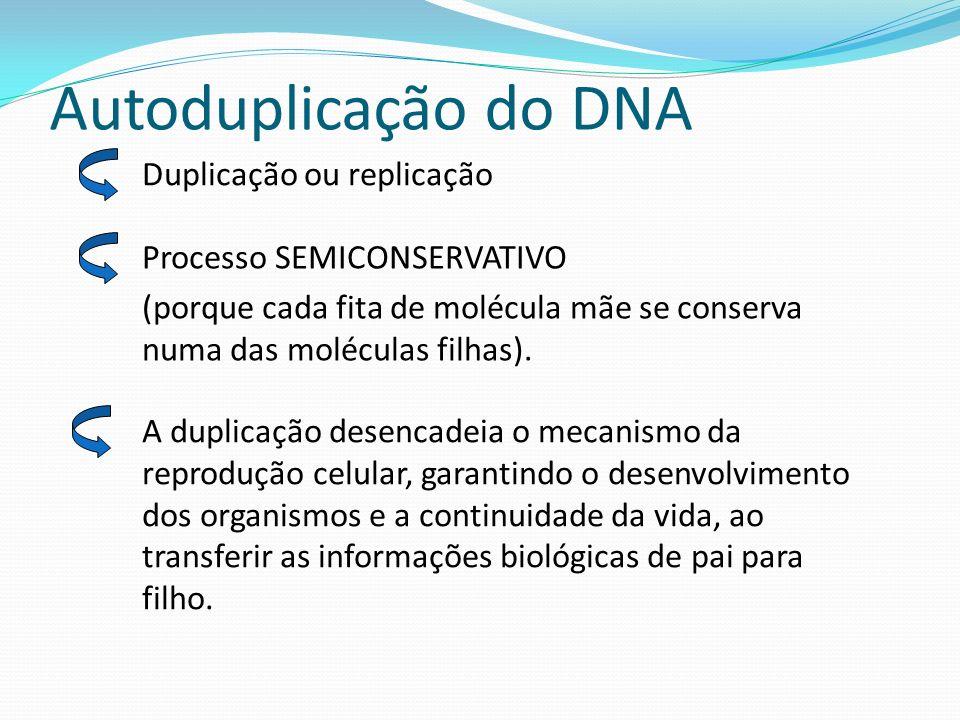 Autoduplicação do DNA Duplicação ou replicação Processo SEMICONSERVATIVO (porque cada fita de molécula mãe se conserva numa das moléculas filhas).