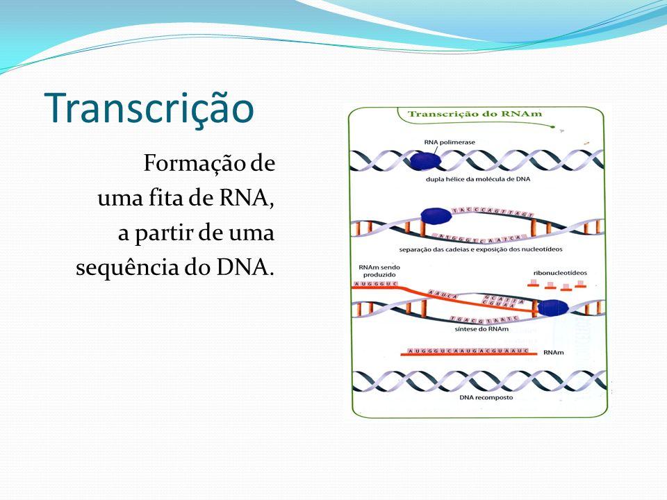 Transcrição Formação de uma fita de RNA, a partir de uma sequência do DNA.