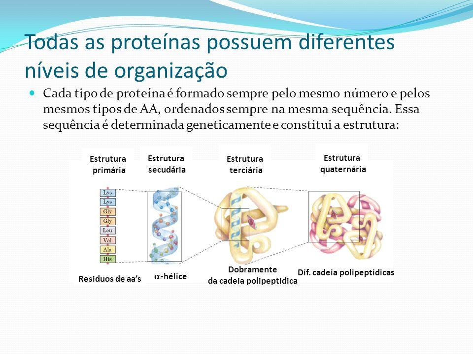 Todas as proteínas possuem diferentes níveis de organização Cada tipo de proteína é formado sempre pelo mesmo número e pelos mesmos tipos de AA, ordenados sempre na mesma sequência.