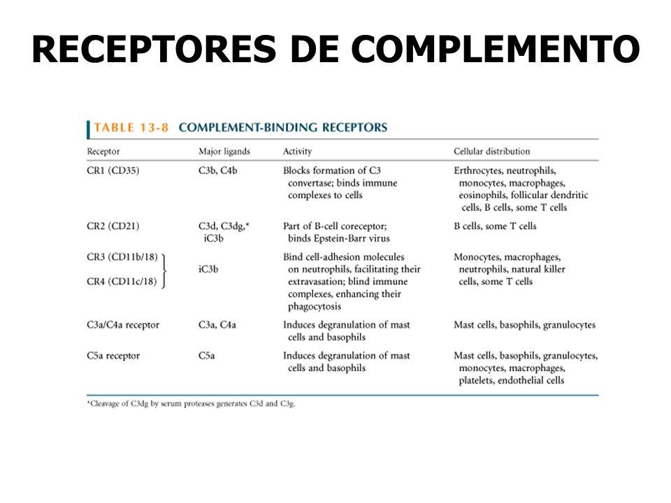 RECEPTORES DE COMPLEMENTO