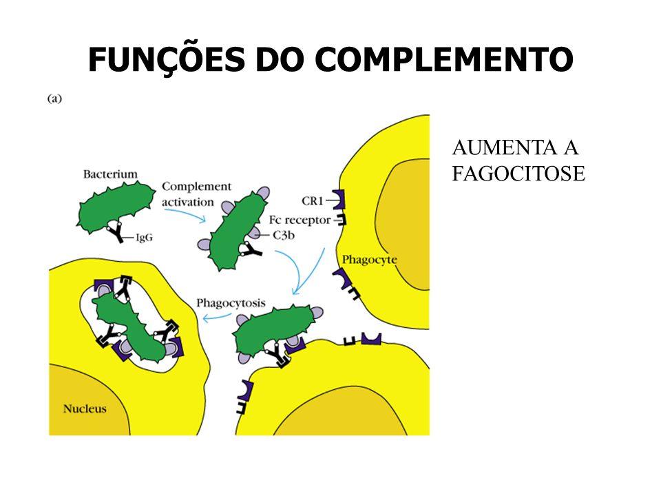 FUNÇÕES DO COMPLEMENTO AUMENTA A FAGOCITOSE