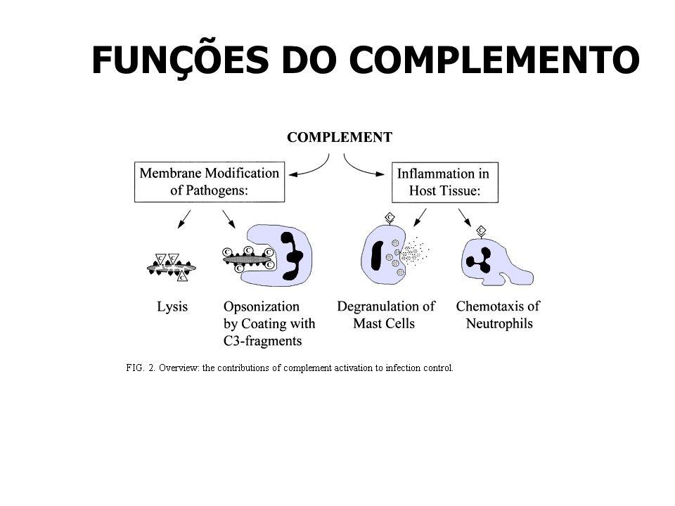 FUNÇÕES DO COMPLEMENTO