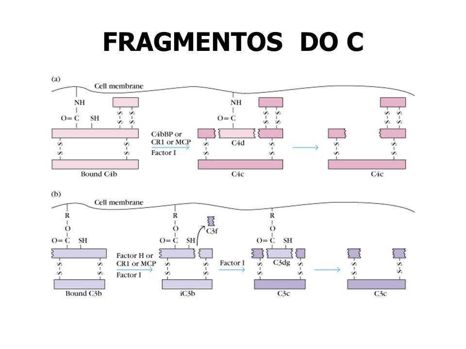 FRAGMENTOS DO C