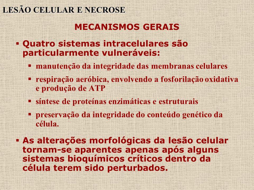 LESÃO CELULAR E NECROSE MECANISMOS GERAIS Quatro sistemas intracelulares são particularmente vulneráveis: manutenção da integridade das membranas celu