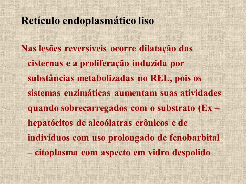 Retículo endoplasmático liso Nas lesões reversíveis ocorre dilatação das cisternas e a proliferação induzida por substâncias metabolizadas no REL, poi