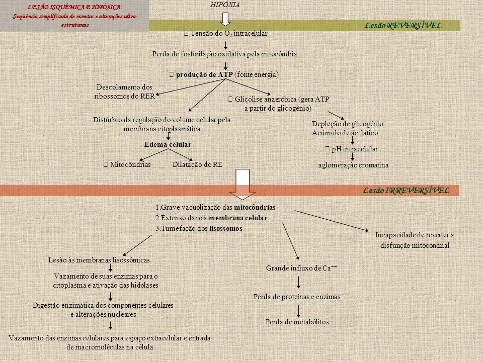Lesão REVERSÍVEL LESÃO ISQUÊMICA E HIPÓXICA: Seqüência simplificada de eventos e alterações ultra- estruturais HIPÓXIA Tensão do O 2 intracelular Perd