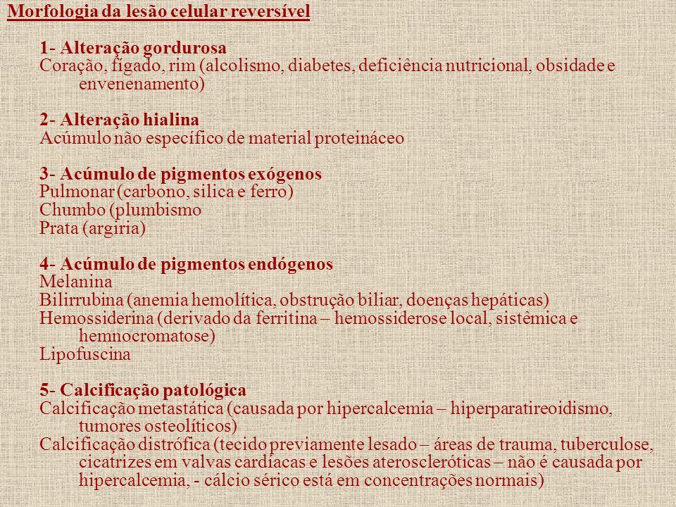 Morfologia da lesão celular reversível 1- Alteração gordurosa Coração, fígado, rim (alcolismo, diabetes, deficiência nutricional, obsidade e envenenam