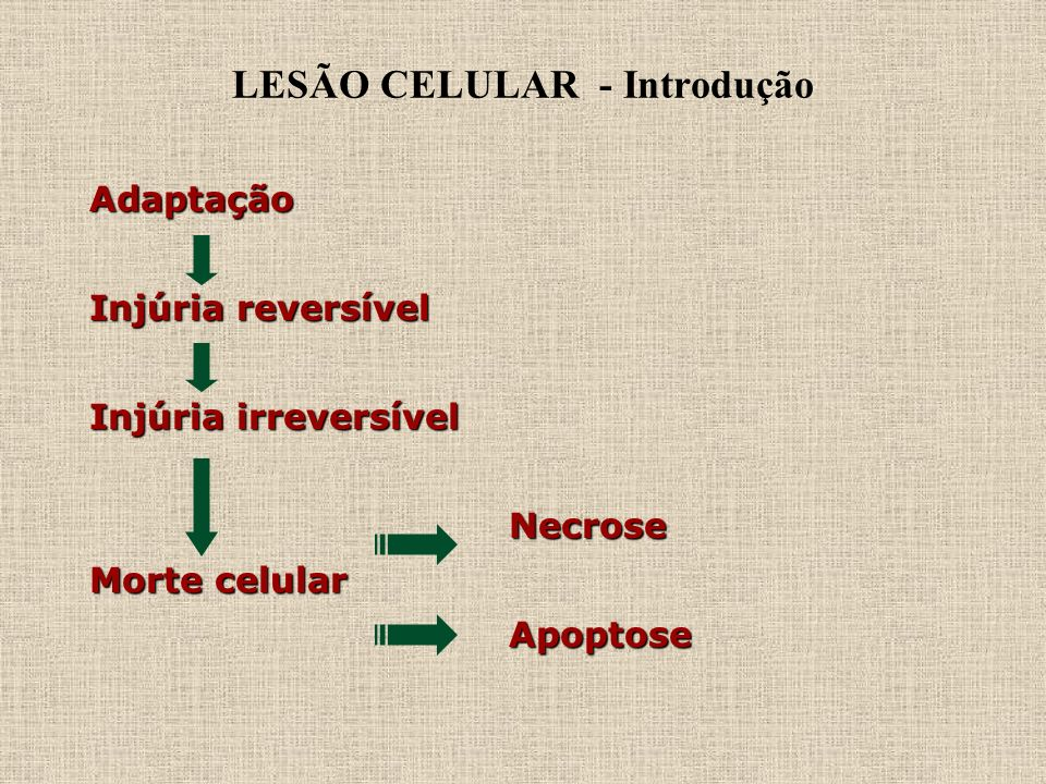 LESÃO CELULAR - Introdução Adaptação Injúria reversível Injúria irreversível Necrose Necrose Morte celular Apoptose Apoptose