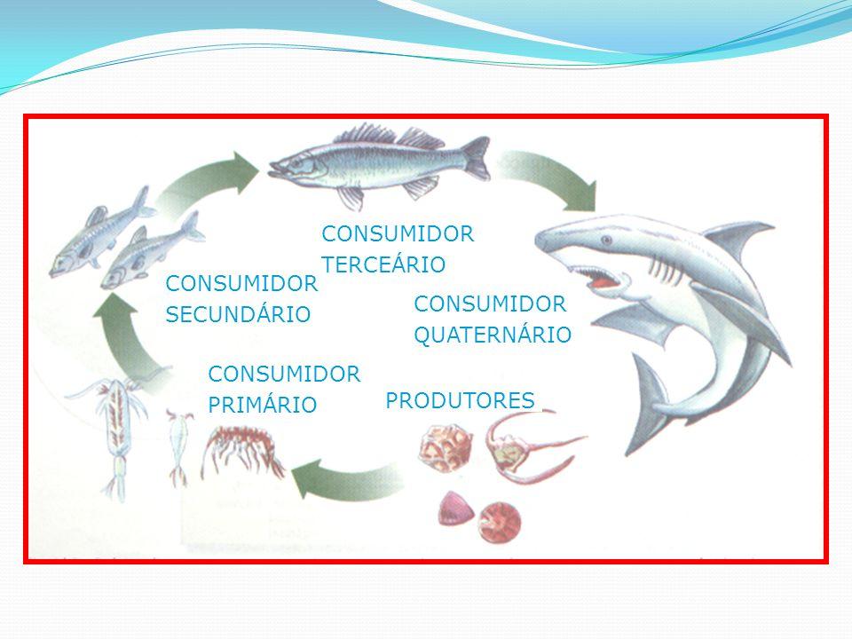PRODUTORES CONSUMIDOR PRIMÁRIO CONSUMIDOR SECUNDÁRIO CONSUMIDOR TERCEÁRIO CONSUMIDOR QUATERNÁRIO