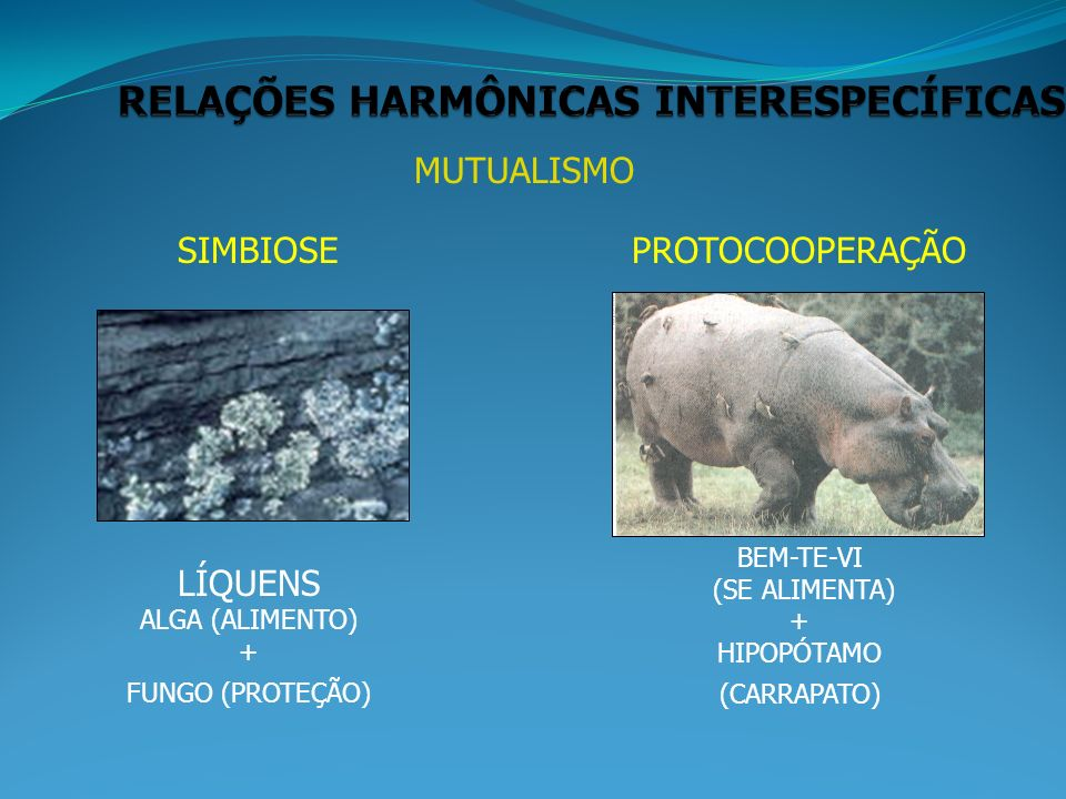 MUTUALISMO SIMBIOSEPROTOCOOPERAÇÃO LÍQUENS ALGA (ALIMENTO) + FUNGO (PROTEÇÃO) BEM-TE-VI (SE ALIMENTA) + HIPOPÓTAMO (CARRAPATO)