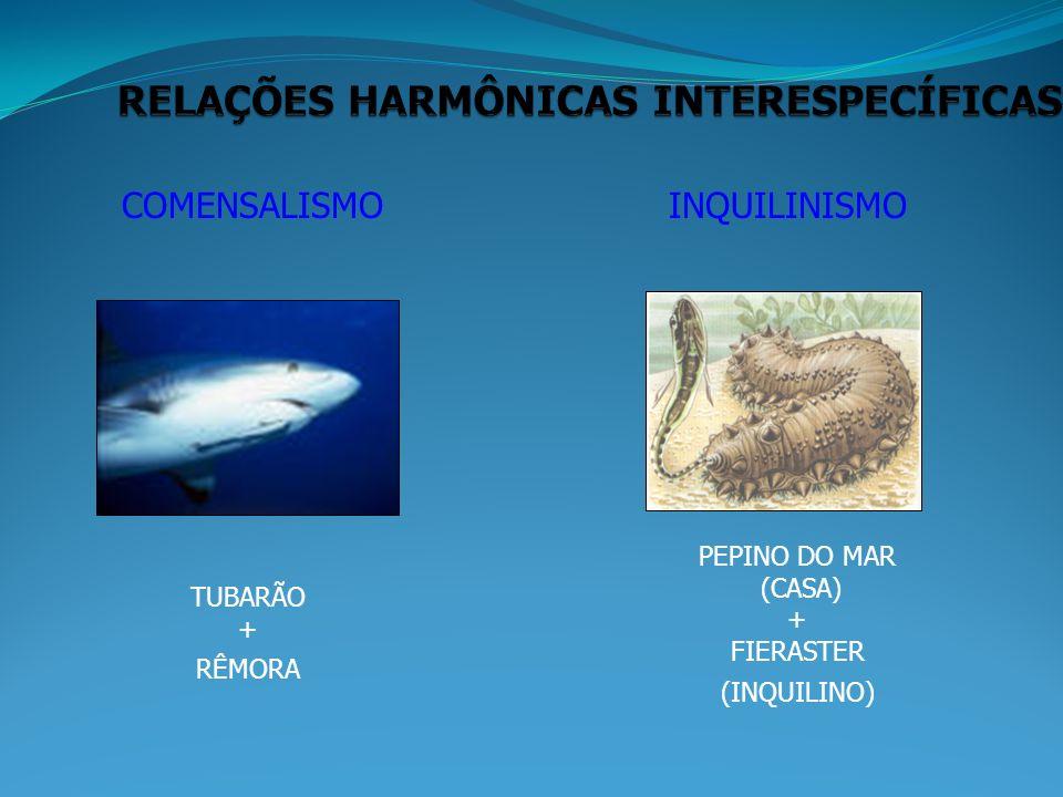 COMENSALISMOINQUILINISMO TUBARÃO + RÊMORA PEPINO DO MAR (CASA) + FIERASTER (INQUILINO)