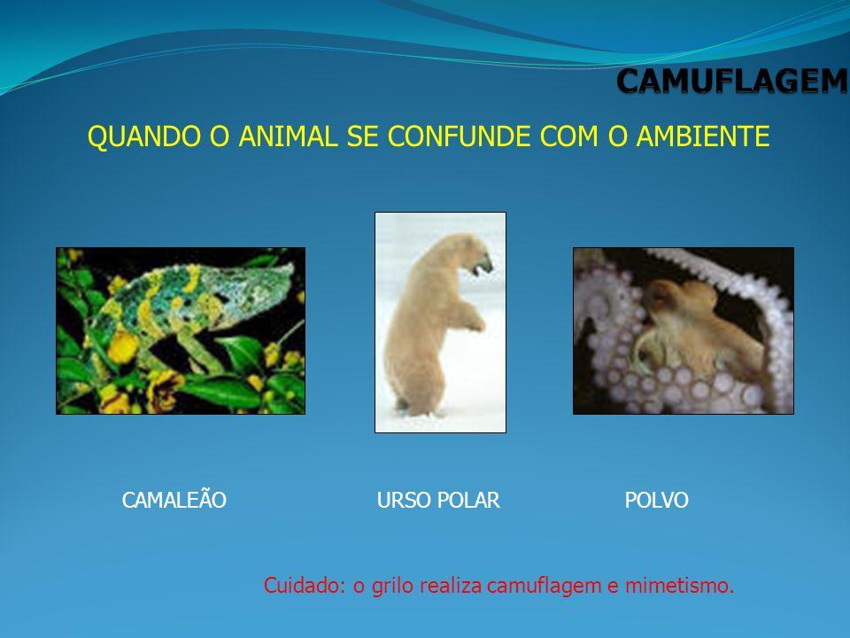 QUANDO O ANIMAL SE CONFUNDE COM O AMBIENTE CAMALEÃOURSO POLARPOLVO Cuidado: o grilo realiza camuflagem e mimetismo.