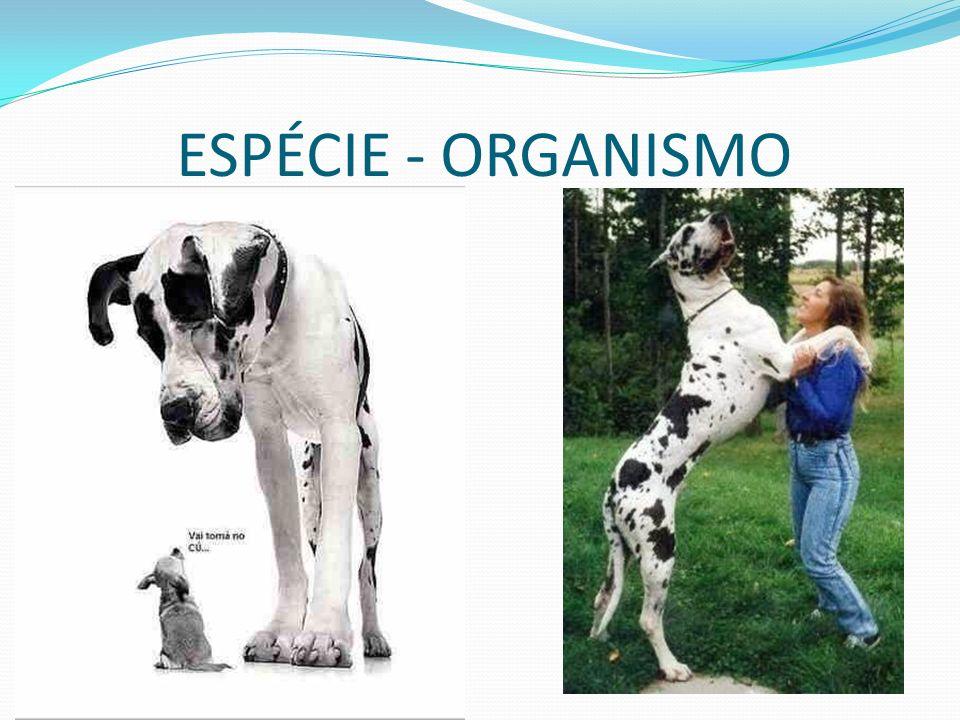 ESPÉCIE - ORGANISMO