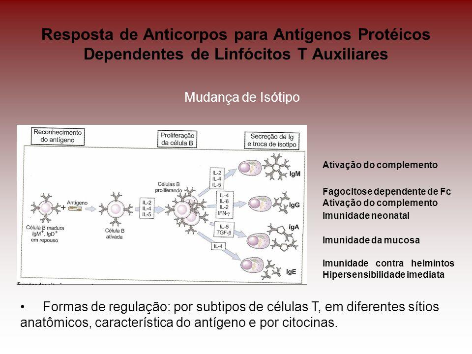 Resposta de Anticorpos para Antígenos Protéicos Dependentes de Linfócitos T Auxiliares Mudança de Isótipo Ativação do complemento Fagocitose dependent