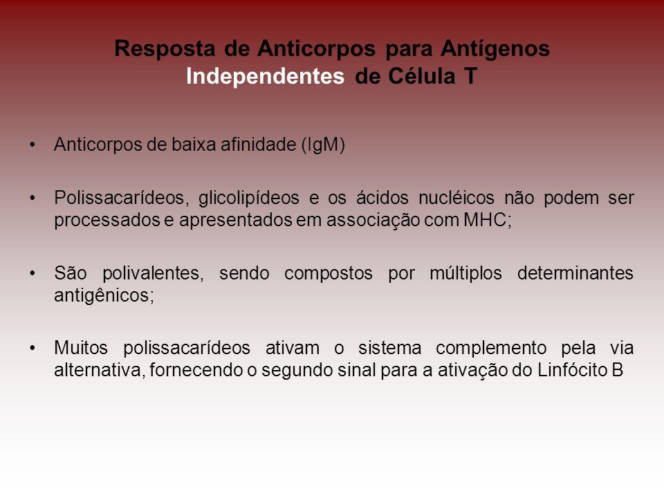 Resposta de Anticorpos para Antígenos Independentes de Célula T Anticorpos de baixa afinidade (IgM) Polissacarídeos, glicolipídeos e os ácidos nucléic