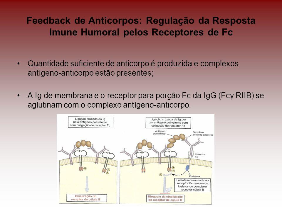 Feedback de Anticorpos: Regulação da Resposta Imune Humoral pelos Receptores de Fc Quantidade suficiente de anticorpo é produzida e complexos antígeno