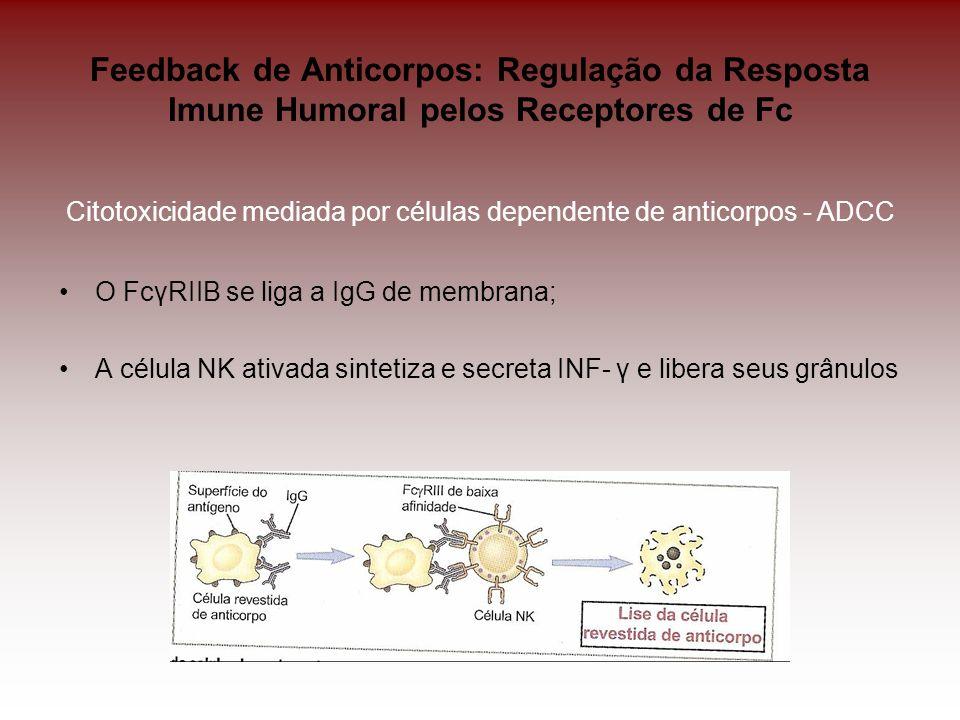 Feedback de Anticorpos: Regulação da Resposta Imune Humoral pelos Receptores de Fc Citotoxicidade mediada por células dependente de anticorpos - ADCC