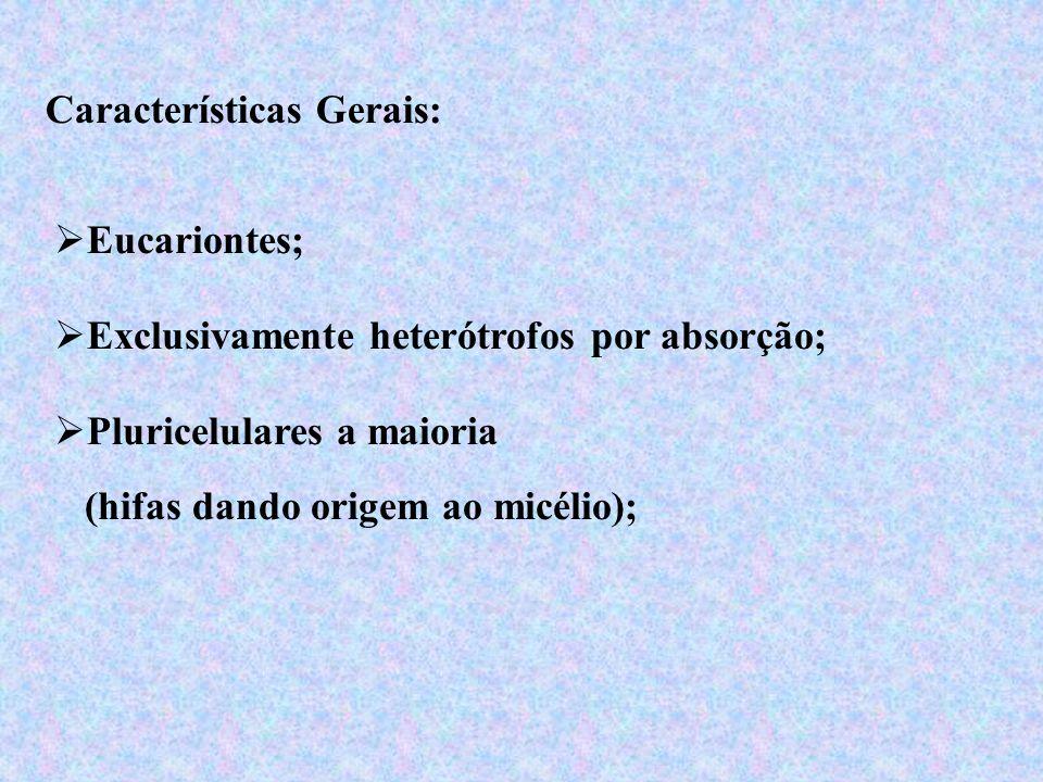 Características Gerais: Eucariontes; Pluricelulares a maioria (hifas dando origem ao micélio); Exclusivamente heterótrofos por absorção;
