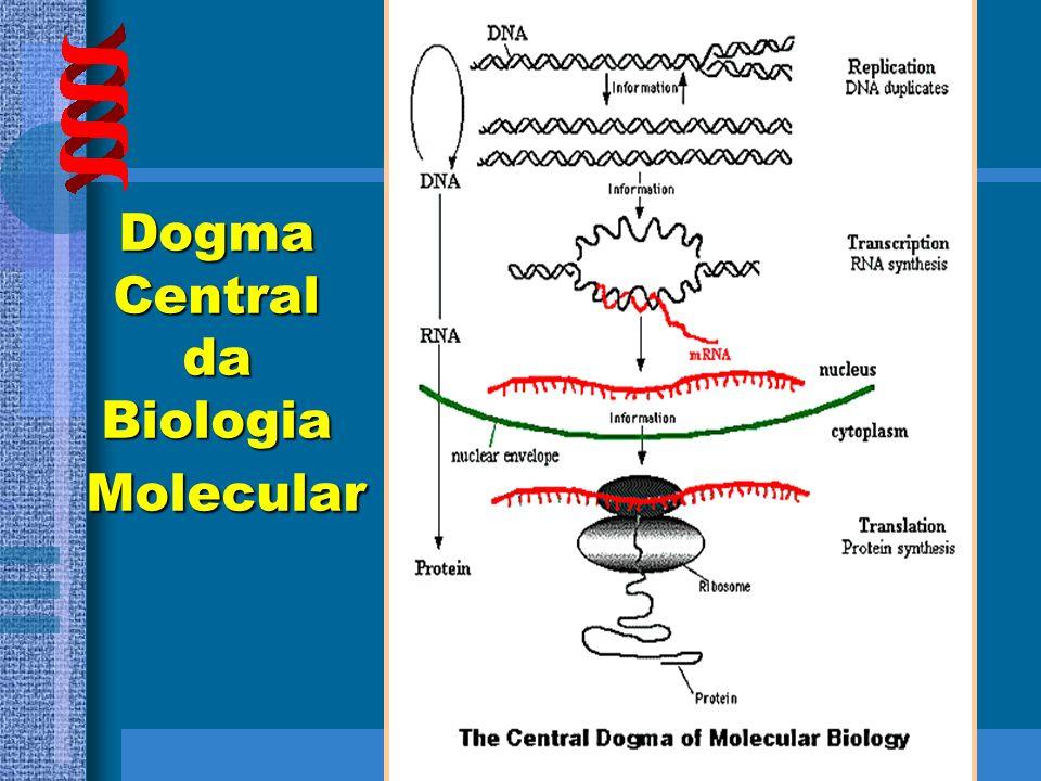 HISTÓRICO 1957 – CRICK e GAMOV Dogma Central da Biologia Molecular DNA RNA PROTEÍNA