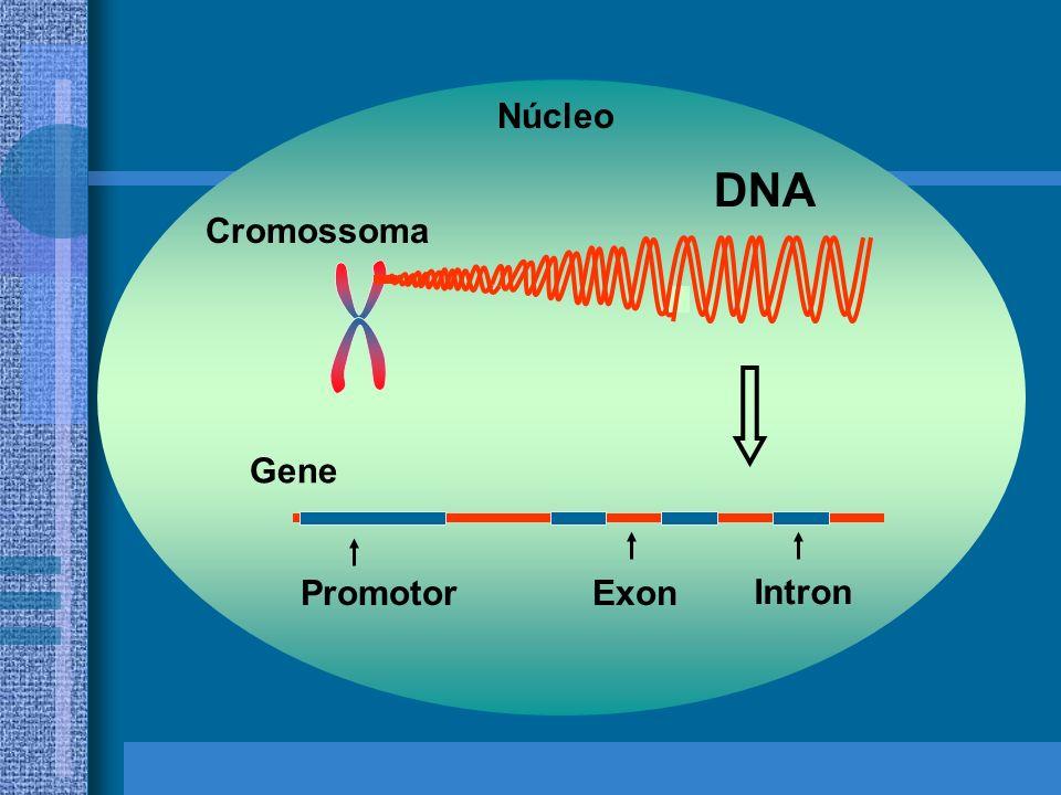Desta forma, com a disponibilidade de novos recursos, vários mecanismos biológicos, como a replicação do DNA e a divisão celular, começaram a ser inte