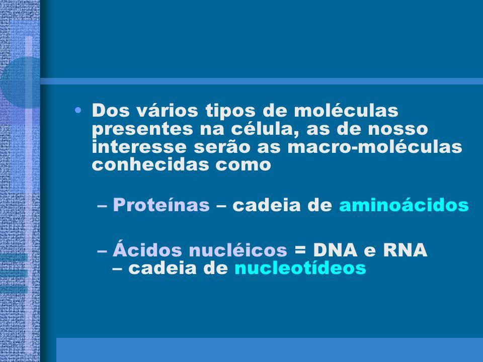 Organização estrutural das células –Procarióticas –Eucarióticas