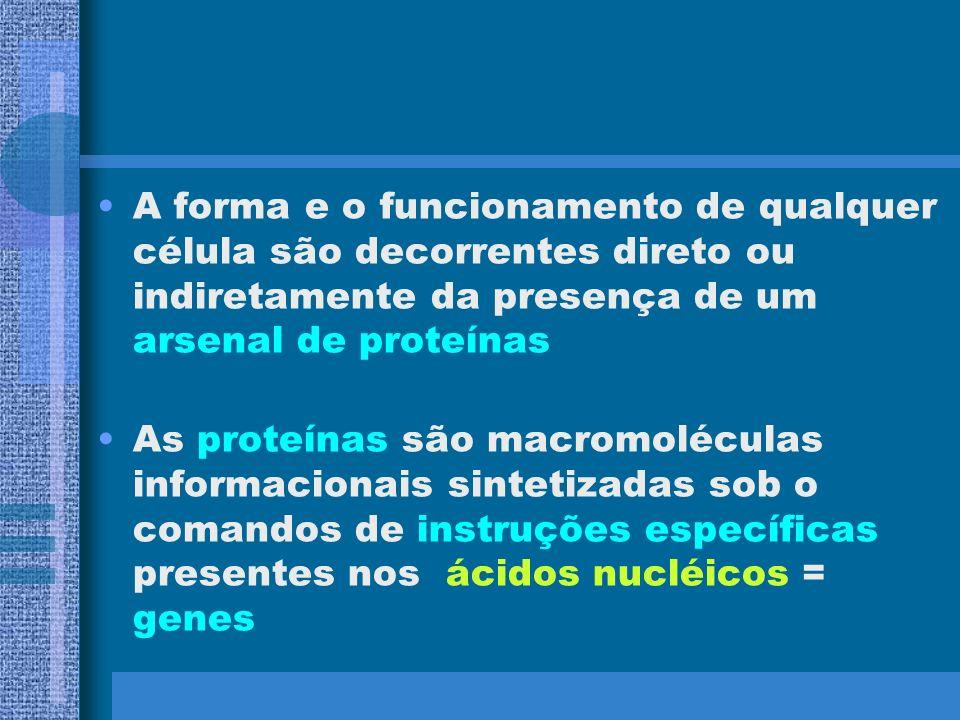 Dos vários tipos de moléculas presentes na célula, as de nosso interesse serão as macro-moléculas conhecidas como –Proteínas – cadeia de aminoácidos –
