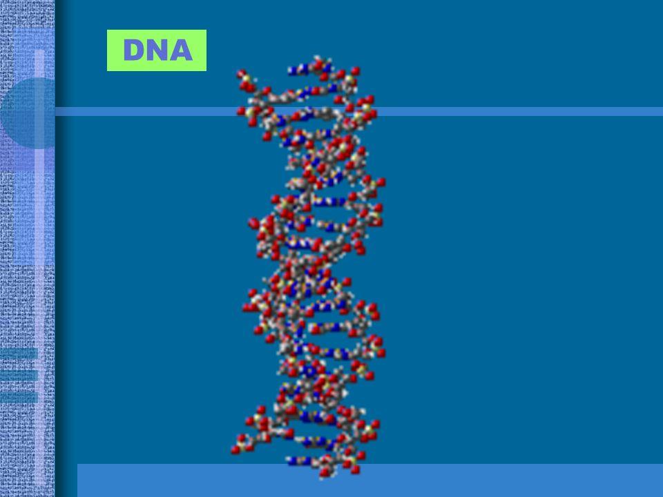 –Alterações nos genes podem acarretar em mudanças na conformação e na atuação das nossas proteínas –De maneira simplista, cada gene = parte funcional