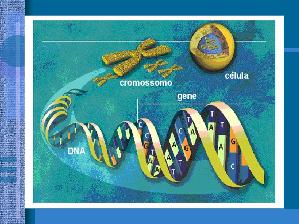 Toda a informação que uma célula necessita durante a sua vida e a de seus descendentes, está organizada em forma de código nas fitas dos ácidos nucléi