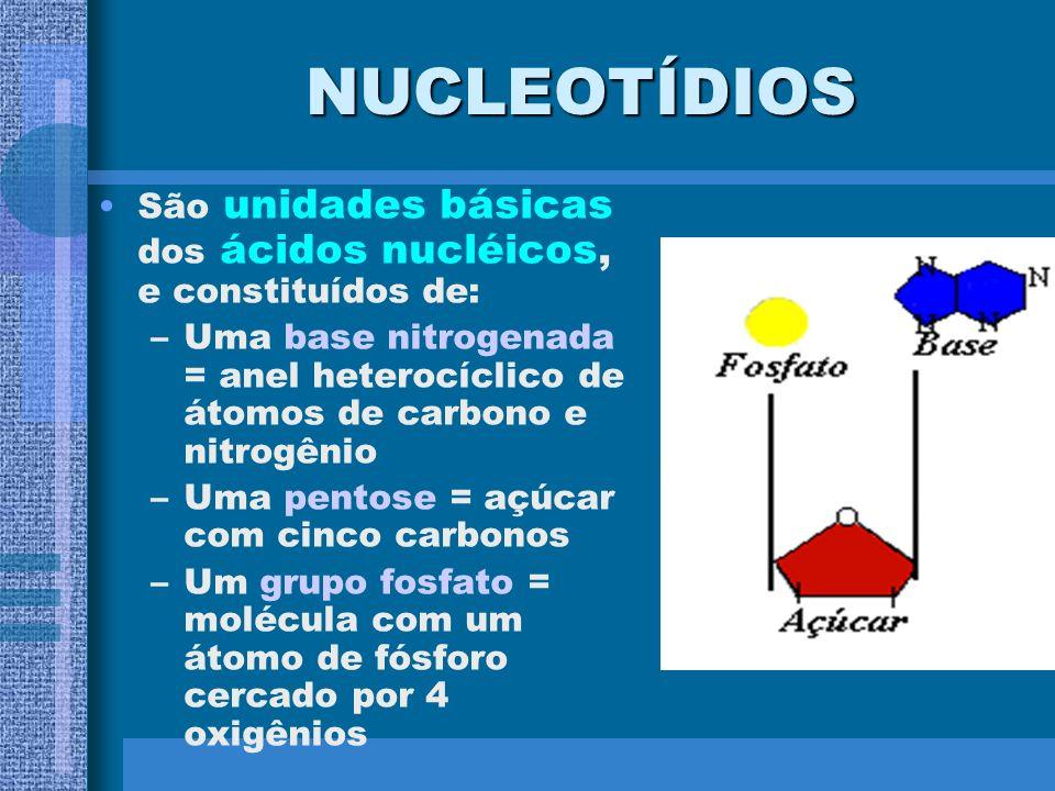 ESTRUTURA DO DNA 1) Estrutura primária - É um polímero não ramificado - Formado por monômeros chamados de nucleotídeos - Cada nucleotídeo contém: 1 Aç