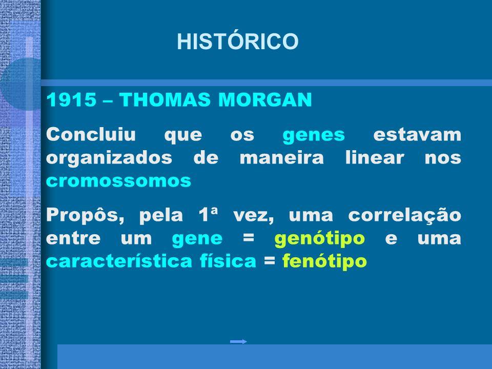 HISTÓRICO 1902 – SUTTON e BOVERI Padrão de herança dos fatores acompanhava a segregação dos cromossomos de células em divisão 1909 – JOHANNSEN Nomeou
