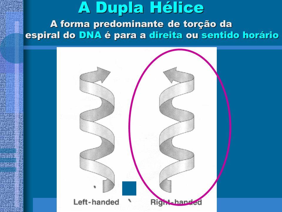 As fitas do DNA estão dispostas em direções opostas Antiparalelismo