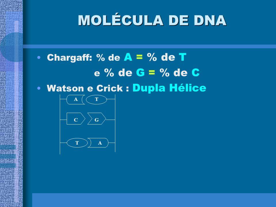 O B-DNA é o predominante em condições fisiológicas A Dupla Hélice
