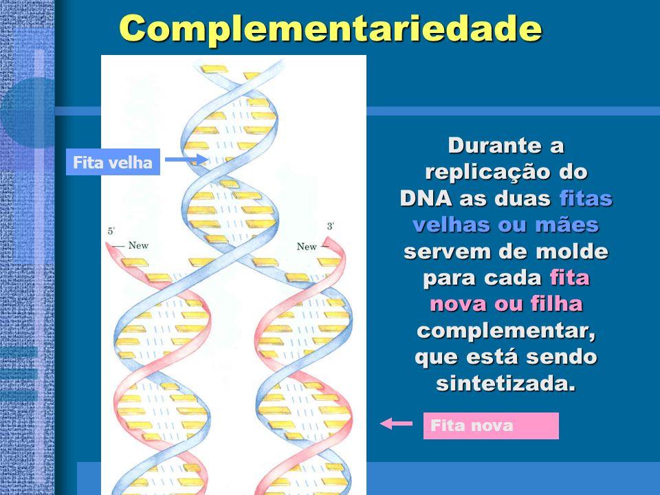 PAPÉIS BIOLÓGICOS DO DNA A duplicação do DNA permite que a PROGRAMAÇÃO hereditária da célula seja transmitida às células-filhas; O DNA controla a ativ