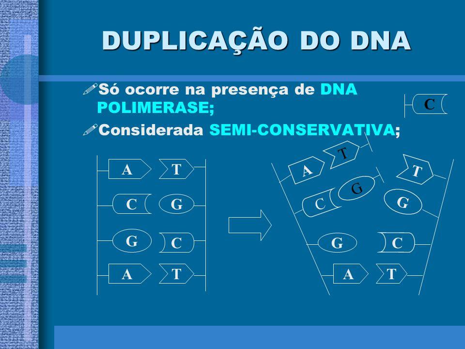Durante a replicação do DNA as duas fitas velhas ou mães servem de molde para cada fita nova ou filha complementar, que está sendo sintetizada. Fita n
