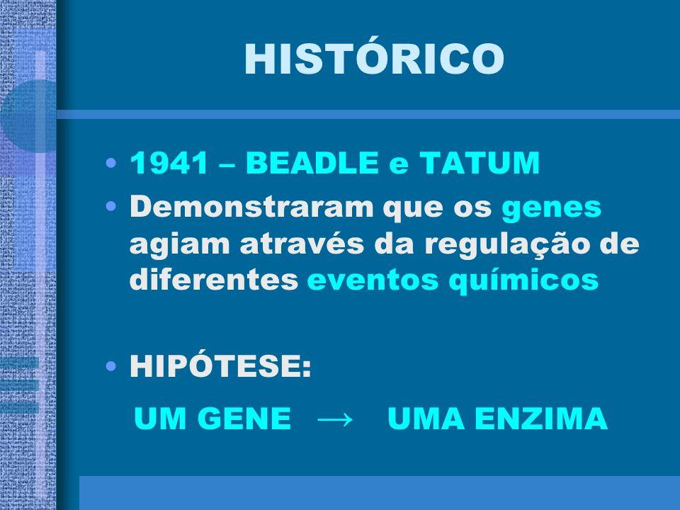 HISTÓRICO 1915 – THOMAS MORGAN Concluiu que os genes estavam organizados de maneira linear nos cromossomos Propôs, pela 1ª vez, uma correlação entre u
