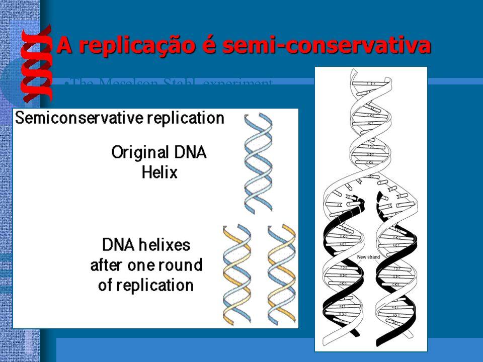 DUAS NOVAS MOLÉCULAS DE DNA DUPLICAÇÃO SEMI-CONSERVATIVA A C G A T G C T A C G A T G C T