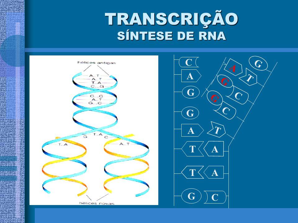 TRANSCRIÇÃO SÍNTESE DE RNA O DNA sempre serve de molde para fabricar o RNA; Presença de RNA polimerase; As duas fitas de DNA se afastam; Entram nucleo