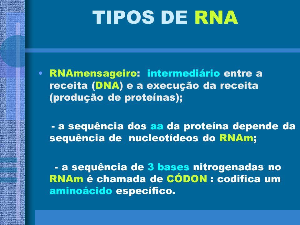 TRANSCRIÇÃO SÍNTESE DE RNA A G G A G C T T A A T C C T G C G G A