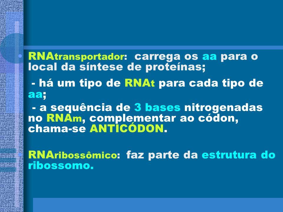 TIPOS DE RNA RNAmensageiro: intermediário entre a receita (DNA) e a execução da receita (produção de proteínas); - a sequência dos aa da proteína depe